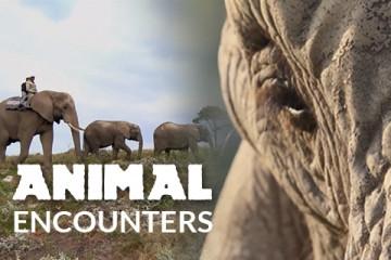 AnimalEncounters